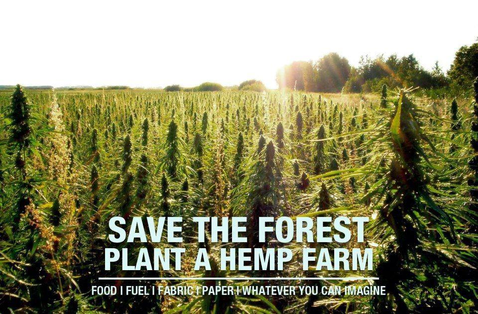 save forest, plant hemp farm